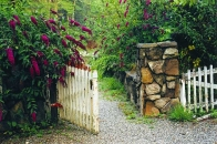 A butterfly bush flanks a garden gate