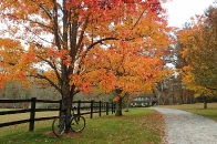 autumn tree with bicycle