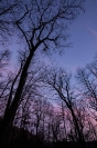 winter trees and moon at sunset